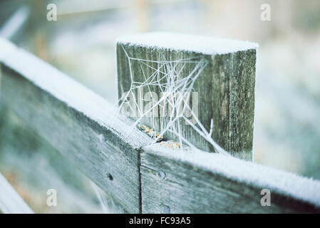 Ice covered cobwebs on wooden fence posts in the winter countryside - Stock Photo