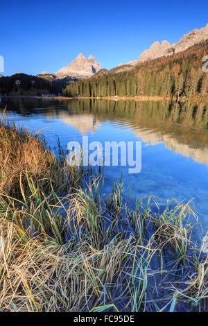 The Three Peaks of Lavaredo and woods reflected in Lake Misurina, Auronzo of Cadore, Dolomites, Veneto, Italy, Europe - Stock Photo