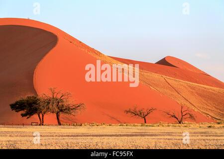 Dune 45 the star dune composed of 5 million year old sand, Sossusvlei, Namib Desert, Namib Naukluft National Park, - Stock Photo