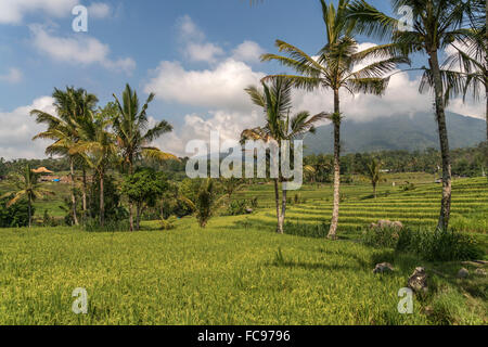 Reisterrassen von Jatiluwih, UNESCO Welterbe auf Bali, Indonesien |  the Jatiluwih Rice Terraces, UNESCO world heritage - Stock Photo