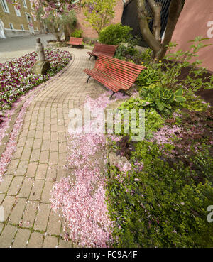 Small park with cherry tree petals on the ground in Ystad, Sweden. Scandinavia. - Stock Photo