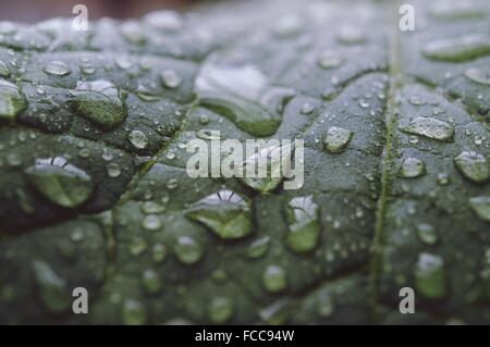 Detail Shot Of Water Drops On Leaf - Stock Photo