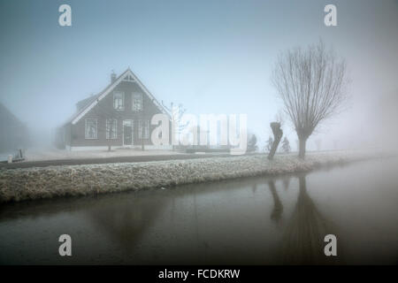Netherlands, Vlist, Children cycling to school along canal. Farm, winter, mist, willow tree - Stock Photo