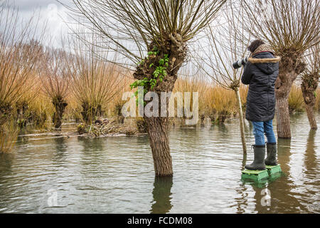 Netherlands, Rhoon, Nature Reserve Rhoonse Grienden. Marshland with willow trees. Photographer Marjolijn van Steeden - Stock Photo