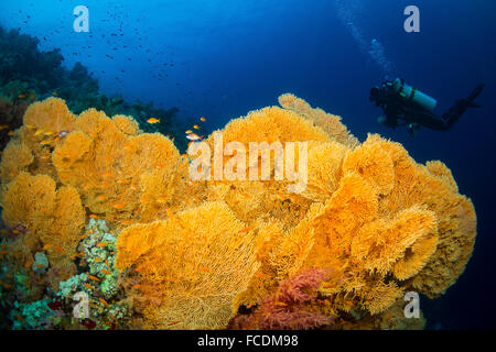 The reefs of the Red Sea - Stock Photo