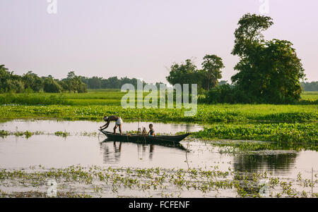 Father and son set nets and traps for shell fish at dawn in a lagoon in their tradition dugout wooden boat. - Stock Photo
