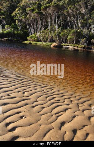 River with tannin colored water at Five Mile Beach. Wilsons Promontory National Park. Victoria, Australia. - Stock Photo