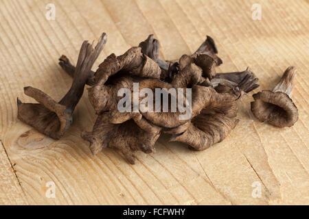 Fresh raw horn of plenty mushrooms - Stock Photo