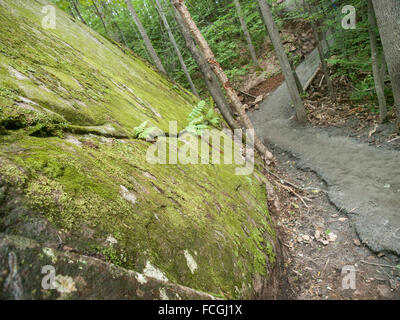 Large boulder covered in green moss and paved downhill hiking path at Algonquin Park, Ontario, Canada. - Stock Photo