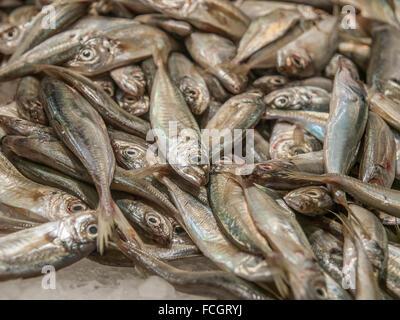 Small fish for sale in a pile on ice at Mercado de La Boqueria in Barcelona, Spain, Europe. - Stock Photo