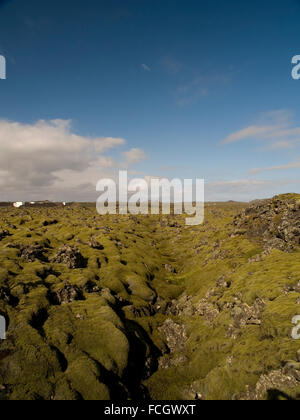 Green moss covering black lava rock in a large field just outside of the Blue Lagoon Spa near Keflavik in Iceland. - Stock Photo