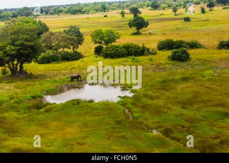 Aerial view of an African elephant at a watering hole, Okavango Delta, Botswana. - Stock Photo