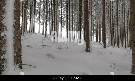 Hoarfrosted trees in a snowy winter woodland, Girkhausen, Bad Berleburg, Sauerland, North Rhine-Westphalia, Germany. - Stock Photo