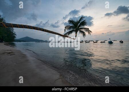 leaning coconut tree on Sairee Beach at sunset, Koh Tao, Thailand. - Stock Photo