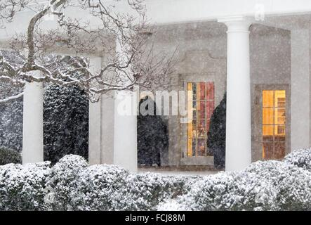 Washington DC, USA. 22nd January, 2016. U.S President Barack Obama works in the Oval Office as snow falls outside - Stock Photo