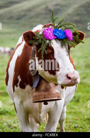 portrait of Swiss cow decorated with flowers and huge bell, desalpes ceremony - cows coming back from high pastures - Stock Photo