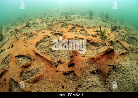 Underwater floor decomposition in a lake during winter giving a red color. - Stock Photo