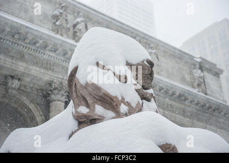 New York, USA. 23rd Jan, 2016. Lion statue covered in snow outside New York Public Library in Midtown Manhattan, - Stock Photo