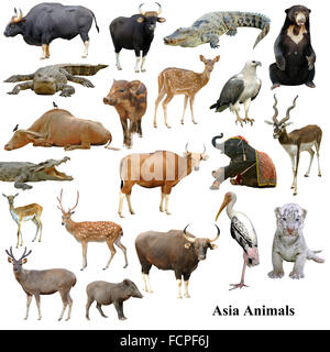 asian animals collection isolated on white background - Stock Photo