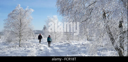 Two walkers walking among birch trees covered in white frost in winter, High Fens / Hautes Fagnes, nature reserve - Stock Photo