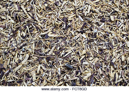 Liquorice (licorice), Glycyrrhiza glabra, Lakritz, Sussholz — root used for flavoring and folk medicine. - Stock Photo