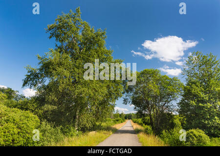 A road leading through wide moor landscape with some trees in the High Fens, Eifel, Belgium with blue sky. - Stock Photo