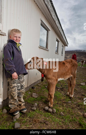 Boy with young calf, Audbrekka farm, Horgardalur valley, Iceland - Stock Photo