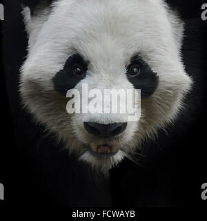 Digital Painting of Giant Panda Bear on Black Background - Stock Photo