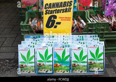 Cannabis Seeds On Sale Bloemenmarkt Amsterdam Province