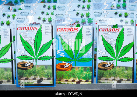 Packet / packets / tin / tin / tins of cannabis plant / plants seed / seeds for sale Amsterdam flower market Holland - Stock Photo