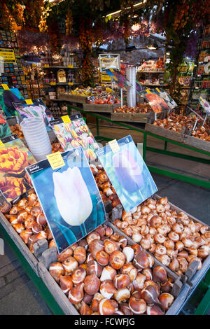 Spring tulip bulbs / tulips for sale in the autumn at the Amsterdam flower market. Singel, Amsterdam, Holland. The - Stock Photo