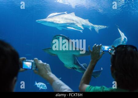 Underwater tunnel of 38 meters in oceans area,Visitors enjoy marine life,Oceanografic by Félix Candela,in City of - Stock Photo