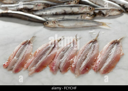 Fresh raw cleaned European anchovies - Stock Photo