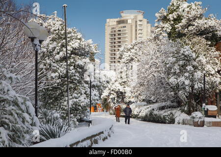 Sochi, Russia. 26th Jan, 2016. People taking pictures of snow-covered trees after a heavy snowfall. Credit:  Artur - Stock Photo