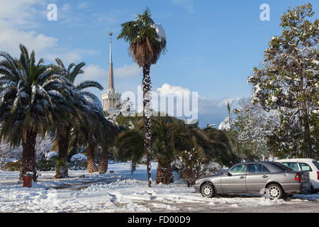 Sochi, Russia. 26th Jan, 2016. Snow covered palm trees after a heavy snowfall. Credit:  Artur Lebedev/TASS/Alamy - Stock Photo