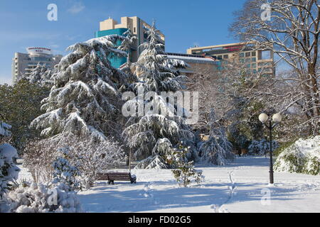 Sochi, Russia. 26th Jan, 2016. A view of snowe covered trees after a heavy snowfall. Credit:  Artur Lebedev/TASS/Alamy - Stock Photo