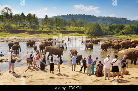 Sri Lanka - tourists watching elephants taking bath in the river, Pinnawela Elephant Orphanage for wild Asian elephants - Stock Photo