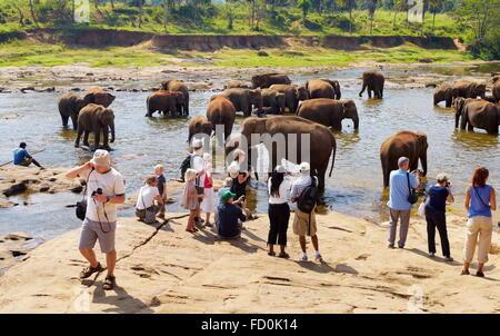 Sri Lanka - tourists watching elephants taking bath in the river, Pinnawela Elephant Orphanage for wild Asian elephants - Stock Photo