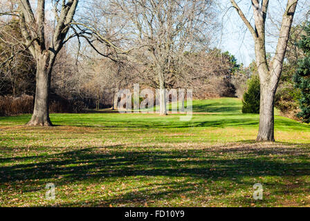 Empty park meadow with several bare trees casting shadows on green grass, with trees and bushes at edges. - Stock Photo