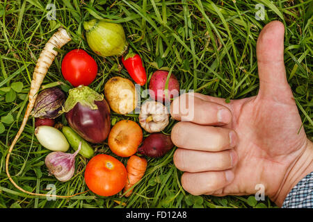 Ripe little vegetables on  grass, laid out in a circle. Healthy foods. Hand making Like - Stock Photo