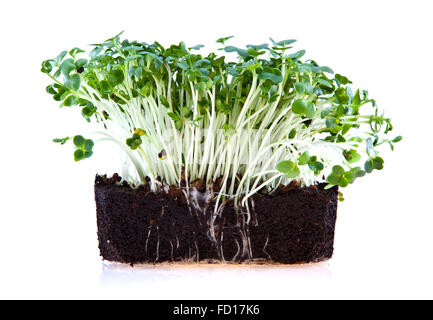 Fresh Garden cress isolated on white background - Stock Photo