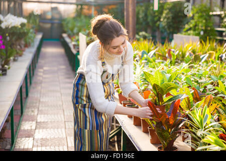 Cute lovely young woman gardener in apron working and taking care of flowers in pots in greenhouse - Stock Photo