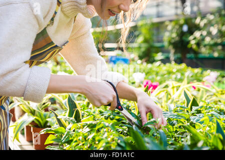 Cute young woman gardener cutting plants with garden scissors in greenhouse - Stock Photo