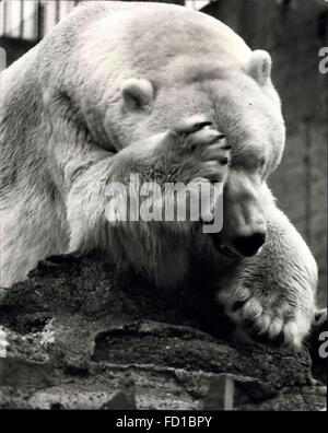 1976 - It's a hard life for Sam the Polar Bear - he's been lonely, wooried, angry and how just plain bored. Ked - Stock Photo