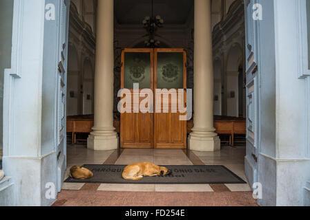 Dogs sleeping in front of, Catedral Metropolitana, Santo Antonio Cathedral, Diamantina, Minas Gerais, Brazil - Stock Photo