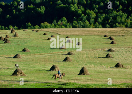 Georgien, Kachetien, Tuscheti-Nationalpark, Omalo, Landwirtschaft - Stock Photo