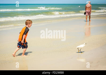 Little boy colorfully dressed, naughtily chases an Egret seabird at the beach near the shoreline with beachcomber - Stock Photo