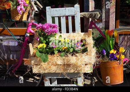 Original ornamental decoration bouquet of spring flowers in a wooden box and iron bucket and retro bike. Flowers - Stock Photo
