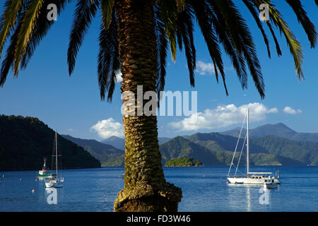 Palm tree and boats moored in Picton Harbour, Marlborough Sounds, South Island, New Zealand - Stock Photo