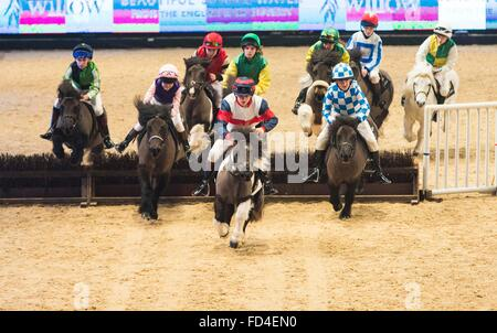 The Liverpool International Horse Show today (Sunday 3/1/16). The Shetland Grand National takes place